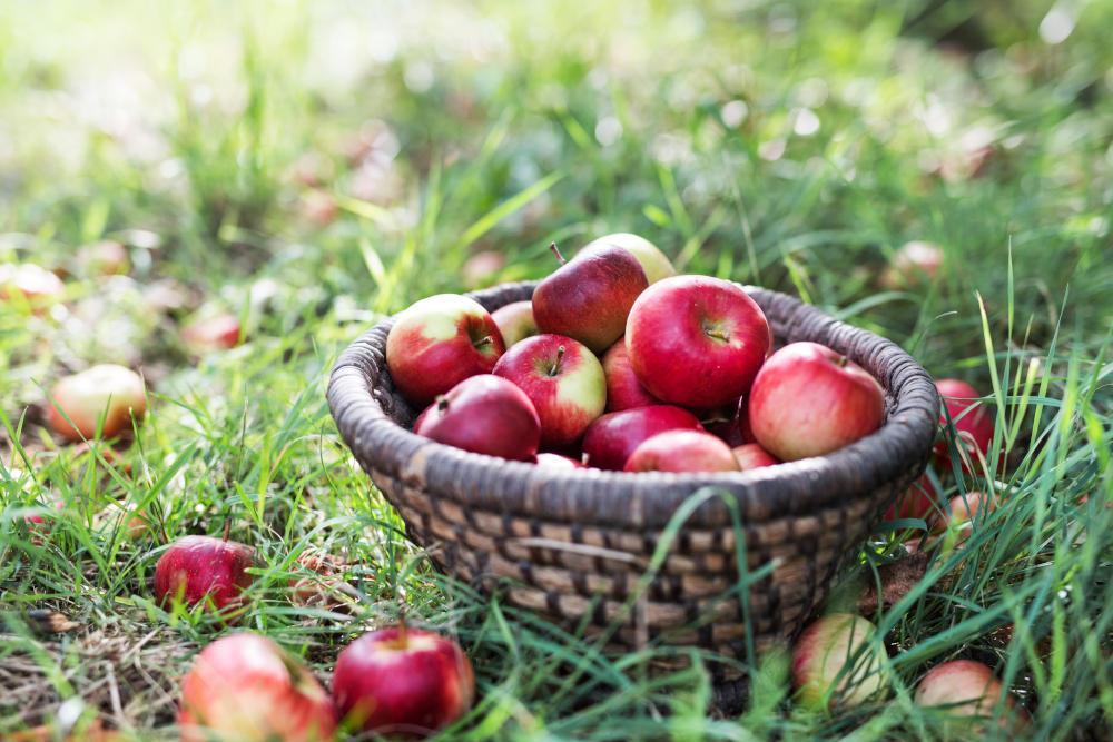 fructe cazute din copac